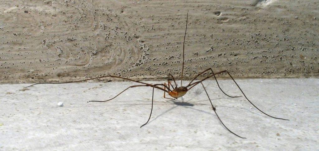 Это темное пятно похоже на рой пауков, но на самом деле все гораздо интереснее...