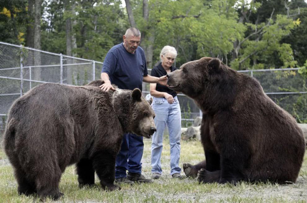 23 года назад они подобрали маленького медвежонка, и вот каким он стал (9 фото)