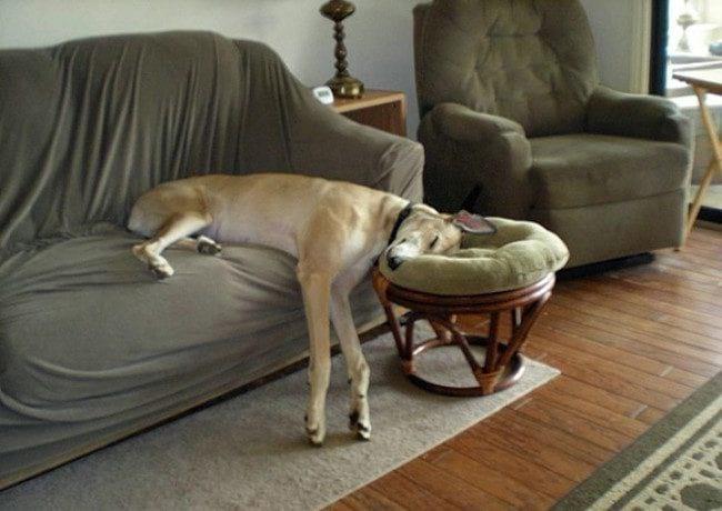 20 Собак, которые спят где угодно и когда угодно (20 фото)