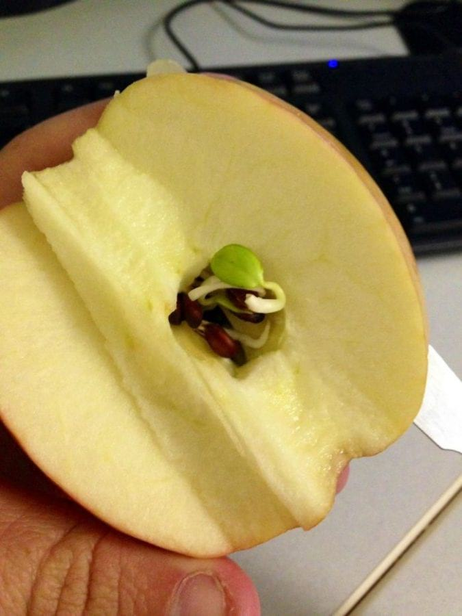 Устрашающие фото, демонстрирующие, что происходит с овощами и фруктами, когда они начинают прорастать! (18 фото)