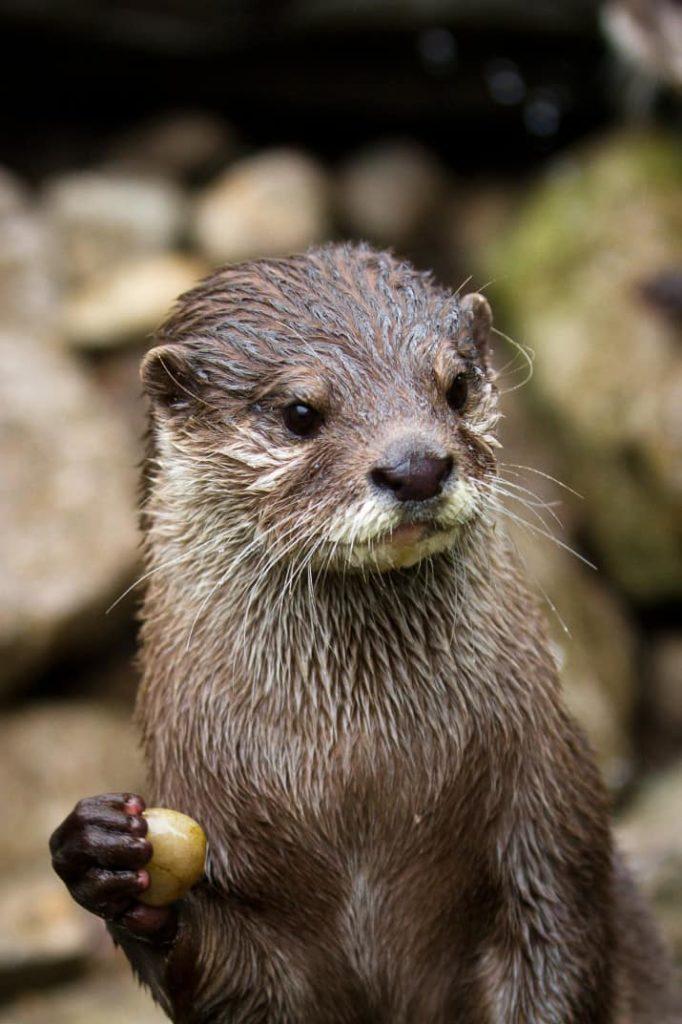 22 неожиданных факта о животных, в которые сложно поверить (22 фото)