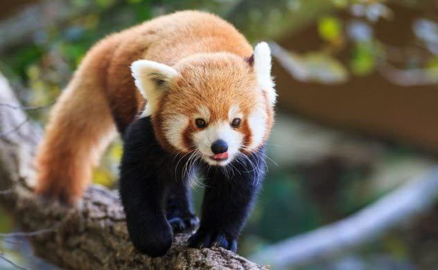 Какие милые животные могут напасть на человека и нанести смертельный укус