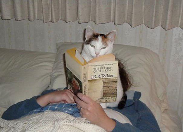 ЮМОР 15 фото котов, чье поведение доводит хозяев до безумия