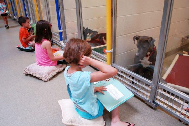 Дети читают вслух в приюте для животных, чтобы помочь запуганным и застенчивым собакам адаптироваться (7 фото + видео)