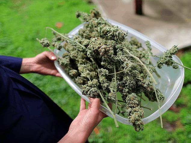 Доступность марихуаны