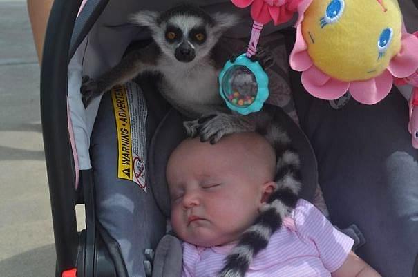 """""""Моя подруга пошла с детьми в зоопарк, и все было нормально, пока она не услышала: """"Женщина, на вашем ребенке сидит лемур!"""""""