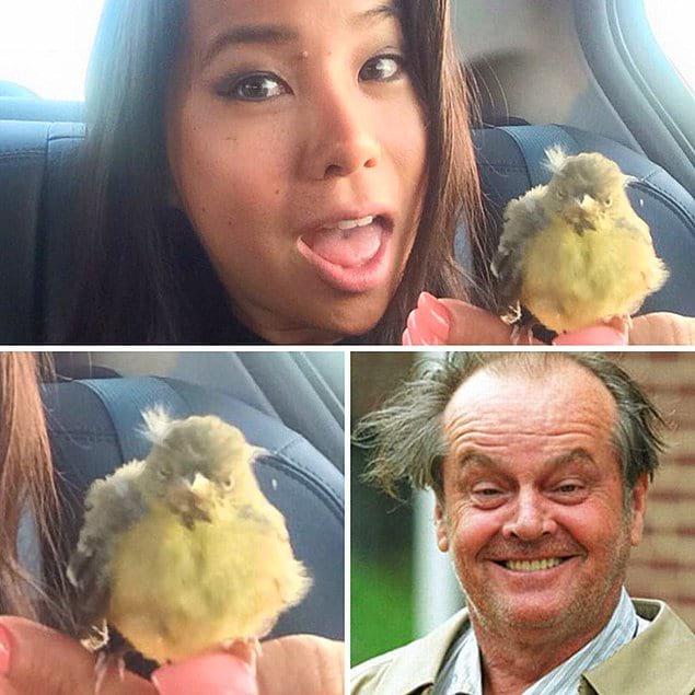 «У моего водителя Uber в машине была птичка - вылитый Джек Николсон!» 😈