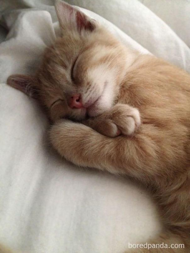 «Я проснулся и увидел это» — люди делятся смешными и милыми фотографиями своих домашних животных