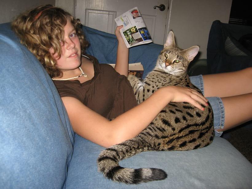 Саванна самая дорогостоящая кошка в мире