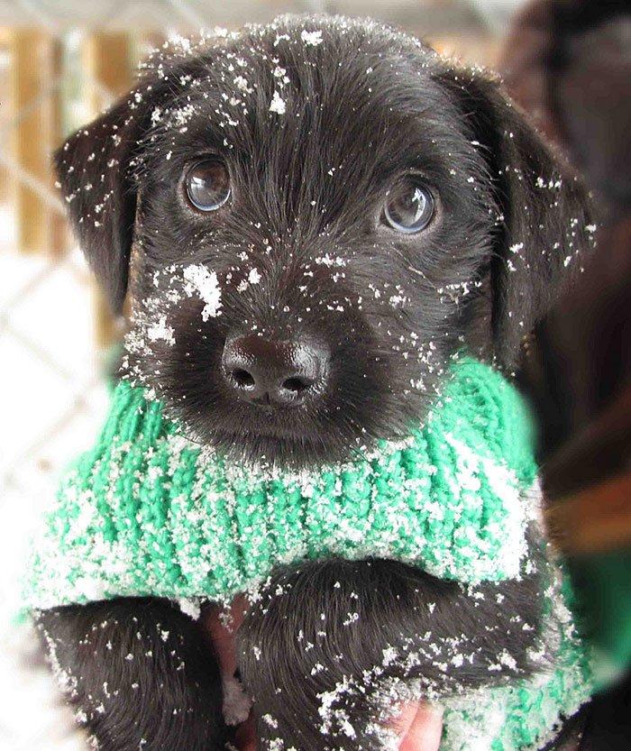 Милее не придумаешь! Реакция животных на первый снег