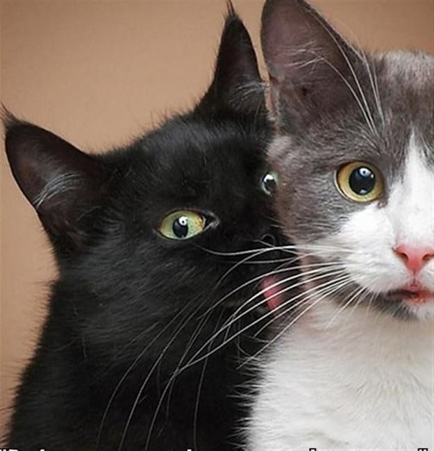 25 фото котов, сделанных в единственно верный момент