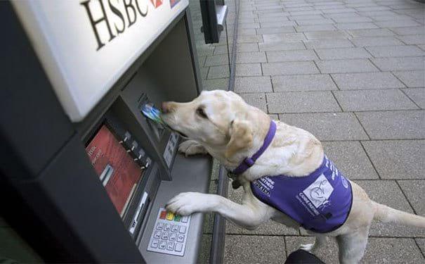 Главное взять с собой безобидного пёсика! Лучшая тактика самообороны у банкомата