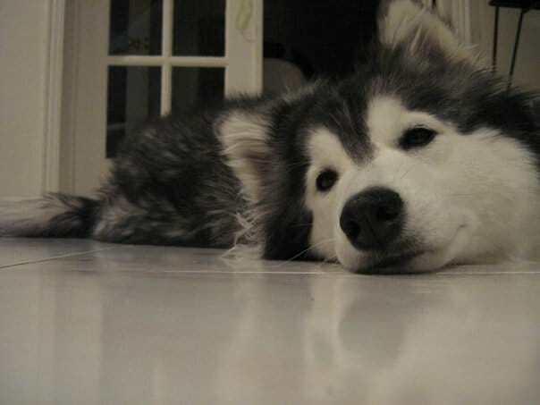 Собака выросла с котами, спустя 2 года владелец заметил некую странность с её лапами
