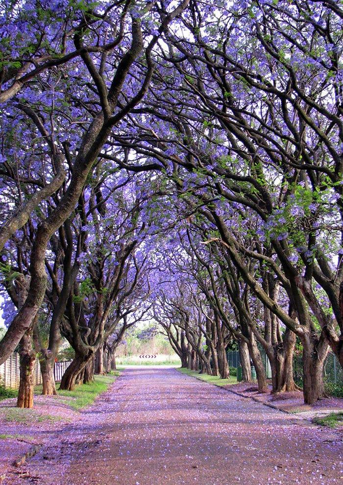 Это самые волшебные улицы мира…Сказочная красота!