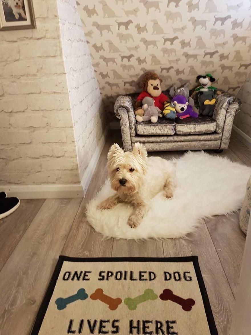 В семье должен был родиться ребёнок, и хозяевам нужно было что-то делать с избалованной собакой. Ответ нашёлся быстро