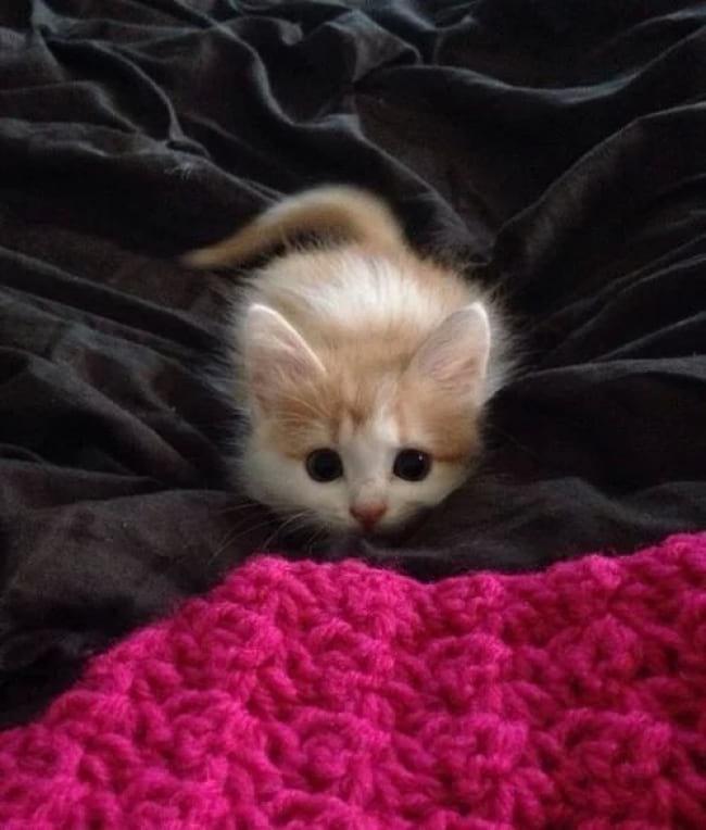 20 самых правдивых фото, в которых отражена вся суть кошачьей натуры