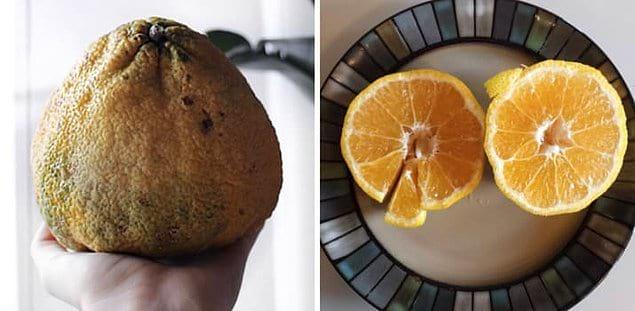 Уродливый фрукт, получившийся из Citrus Reticulata и Citrus Paradisi