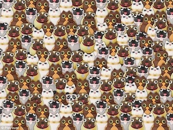 Картинка-загадка: найдите здесь кошку