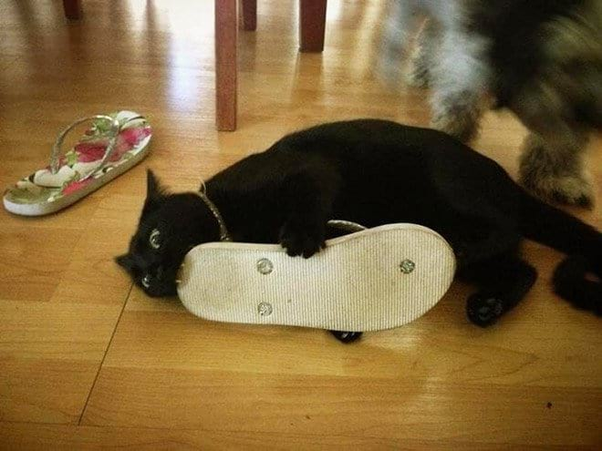 15 кошек, которых кормом не корми, дай сделать кусь-кусь!
