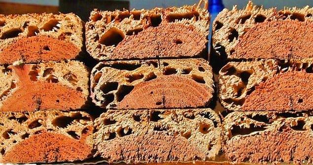 Древесина, повреждённая термитами