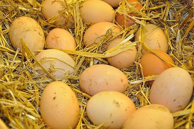 Грязные деревенские яйца