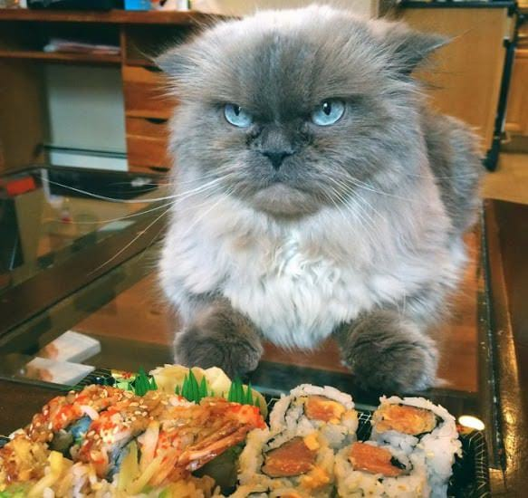 http://wowow.life/wp-content/uploads/kote-nedovolen-sushi.jpg
