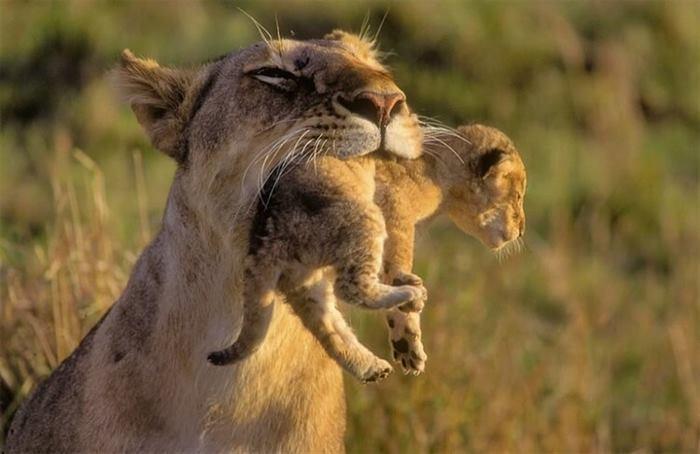Мама – и этим все сказано. Трогательные снимки мамочек животных и их малышей
