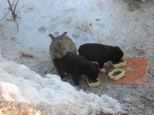 Этот ушастый товарищ доказал, что кролик — это не только ценный мех, но и героический спасатель. Для щенков