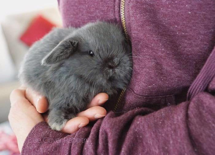 Прелестные крольчата, которые растопят ваше сердце