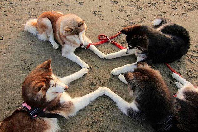 Эти псы явно пытаются кого-то призвать