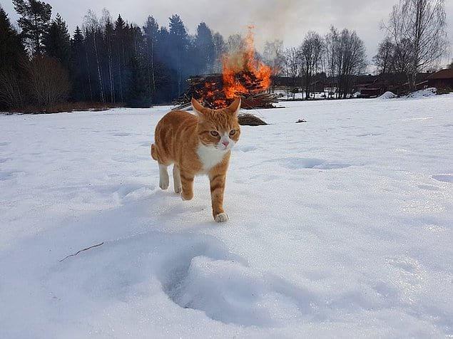 Этот кот выглядит как крутой гангстер, уходящий от взрыва