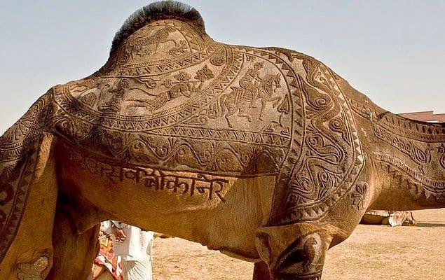 Этот верблюд моднее всех нас вместе взятых
