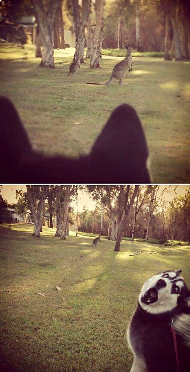 Когда впервые в жизни увидел кенгуру