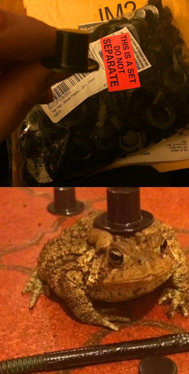 """""""Напившись, случайно купил своей жабе 100 маленьких шляп вместо одной"""""""