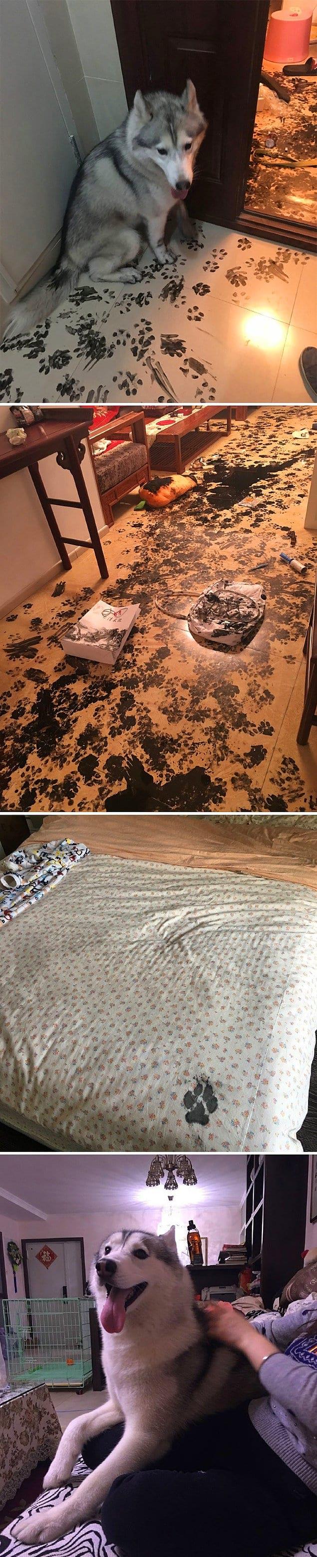Семья ушла в кино на три часа и, придя домой, обнаружила все это и единственный отпечаток лапы на кровати — «Погодите-ка, мне же нельзя залезать на кровать, я же хороший мальчик!»