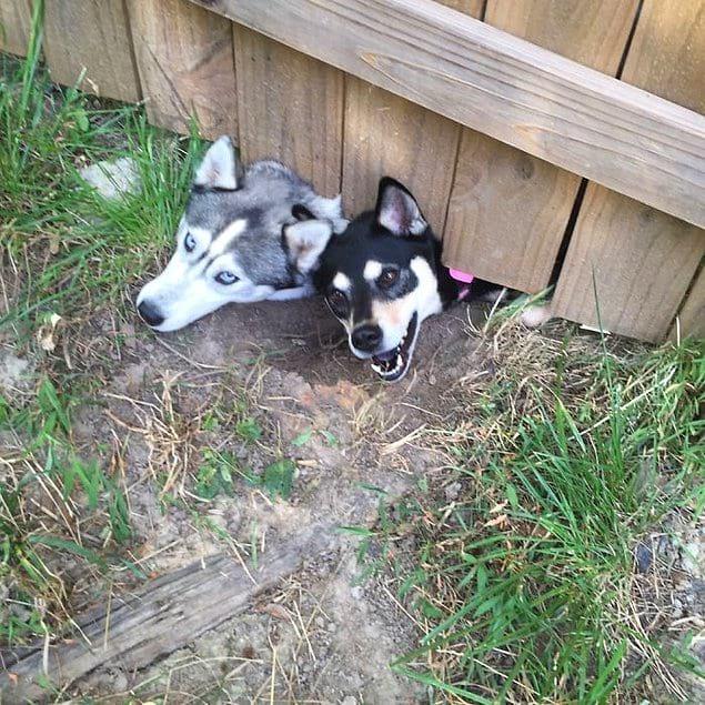 «У нас новые соседи, и у них есть две собаки»