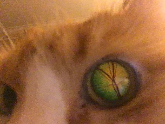 """""""Я случайно сфотографировал глаз своего кота изнутри"""""""
