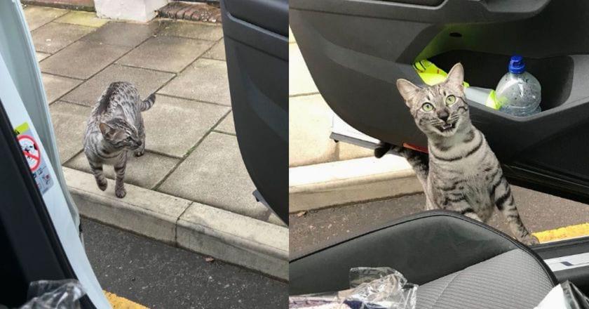 Мужчина ехал домой на машине и случайно встретил своего кота. Реакция питомца интересна
