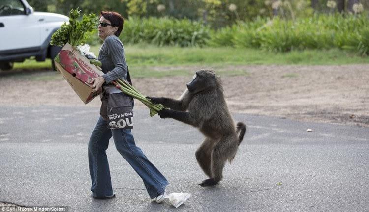 33 животных, во взгляде которых читается: «Не дам — моё!»
