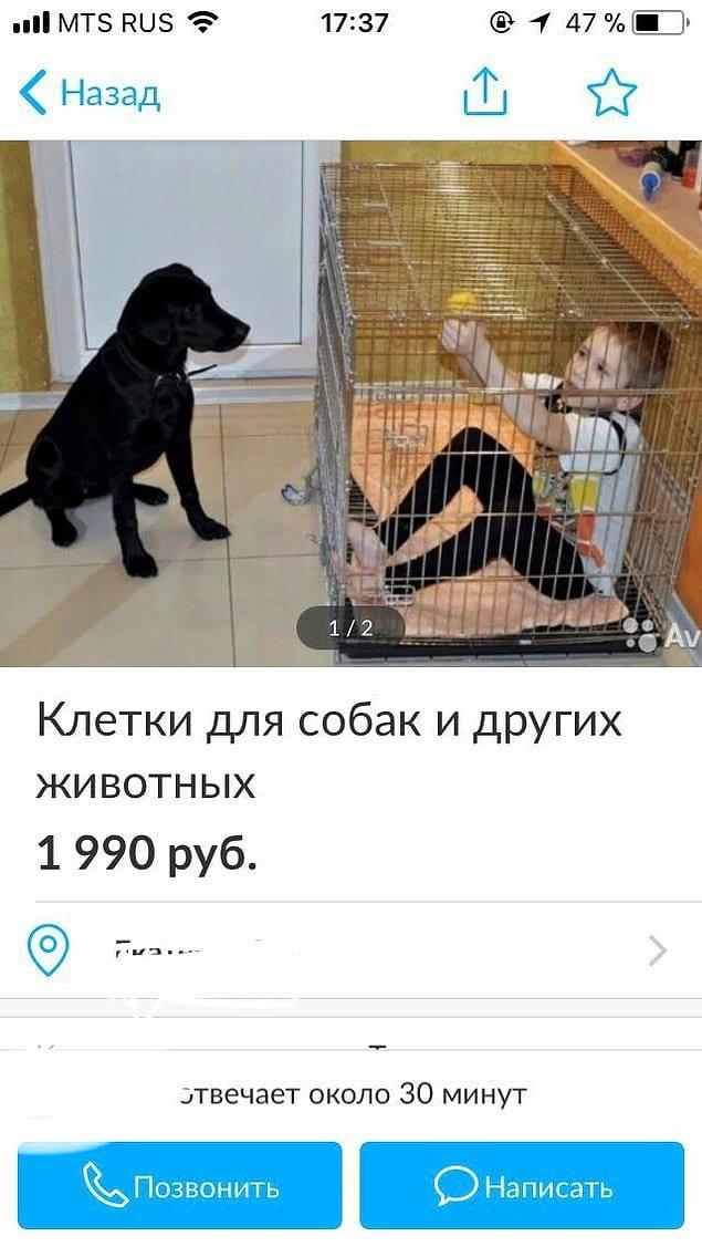 Когда любишь собаку больше ребенка!