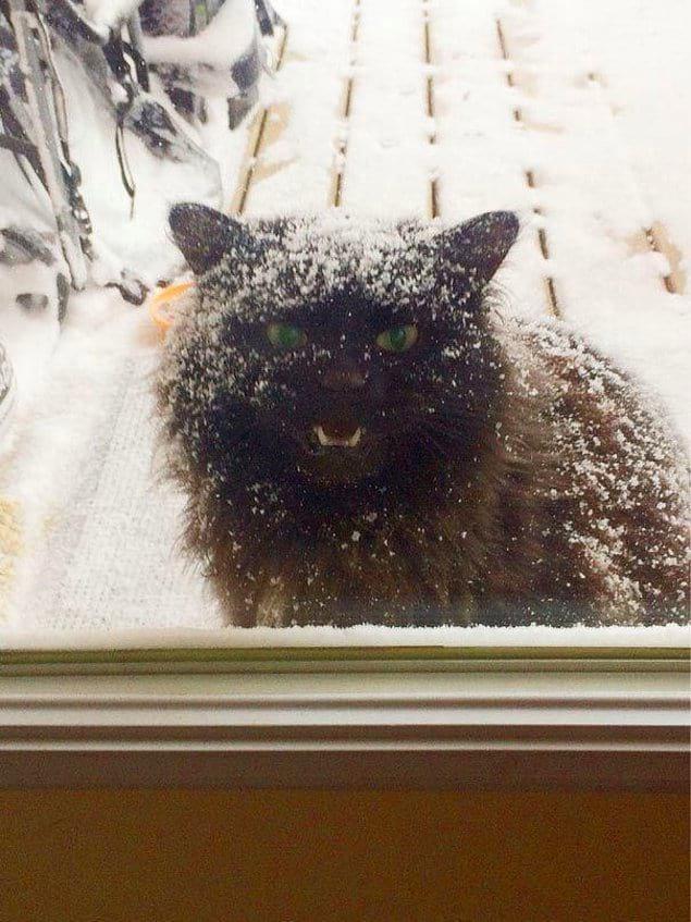 Открывайте! Тут же холодно.