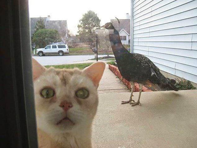 Прошу откройте дверь. Тут какое-то странное создание движется прямо на меня.