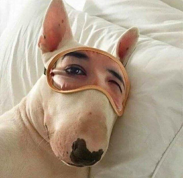Просыпаетесь вы, поворачиваете голову, а рядом с вами на подушке лежит ОНО.
