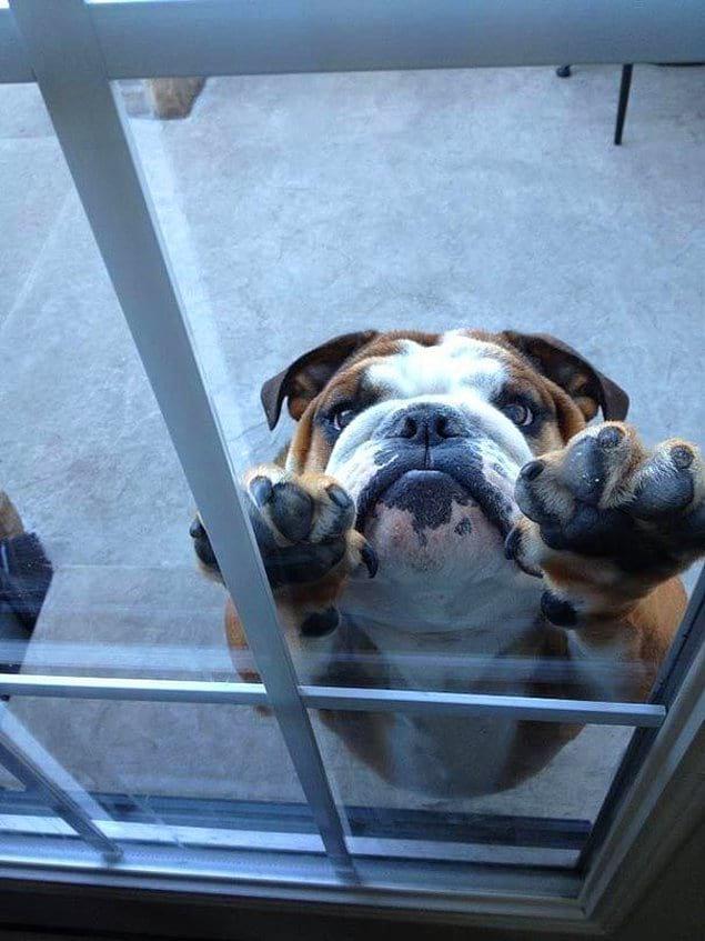Вовка, впусти!