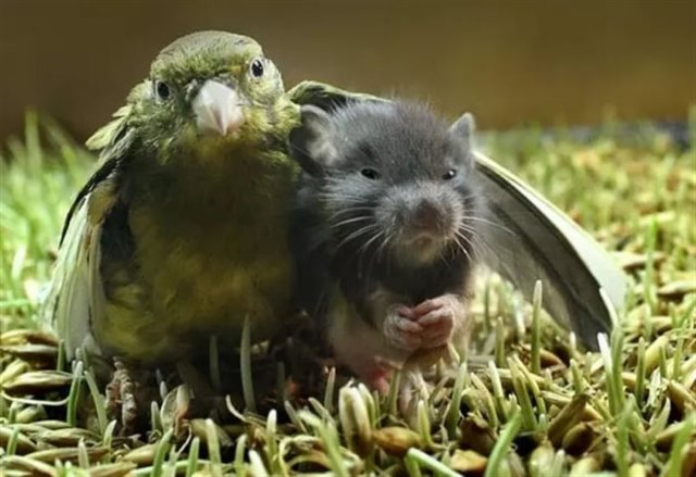 20 Милых фото животных, которые обнимаются. Посмотрев на них вам тоже захочется обнимашек.