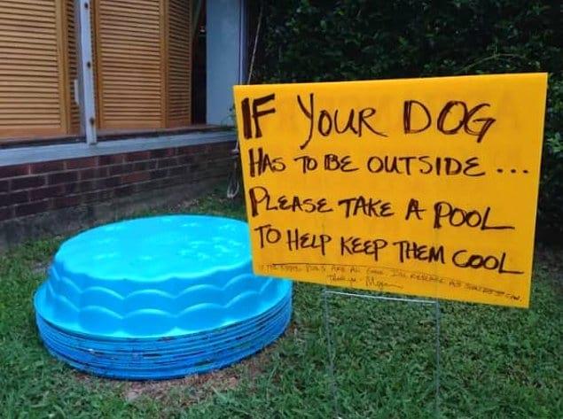 «Если ваша собака живет на улице, возьмите бассейн, чтобы она могла охладиться»