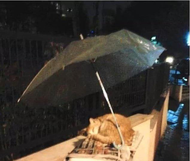 «Какой-то незнакомец заметил кошку, спящую под дождем, и поставил зонтик, чтобы защитить беднягу от непогоды»