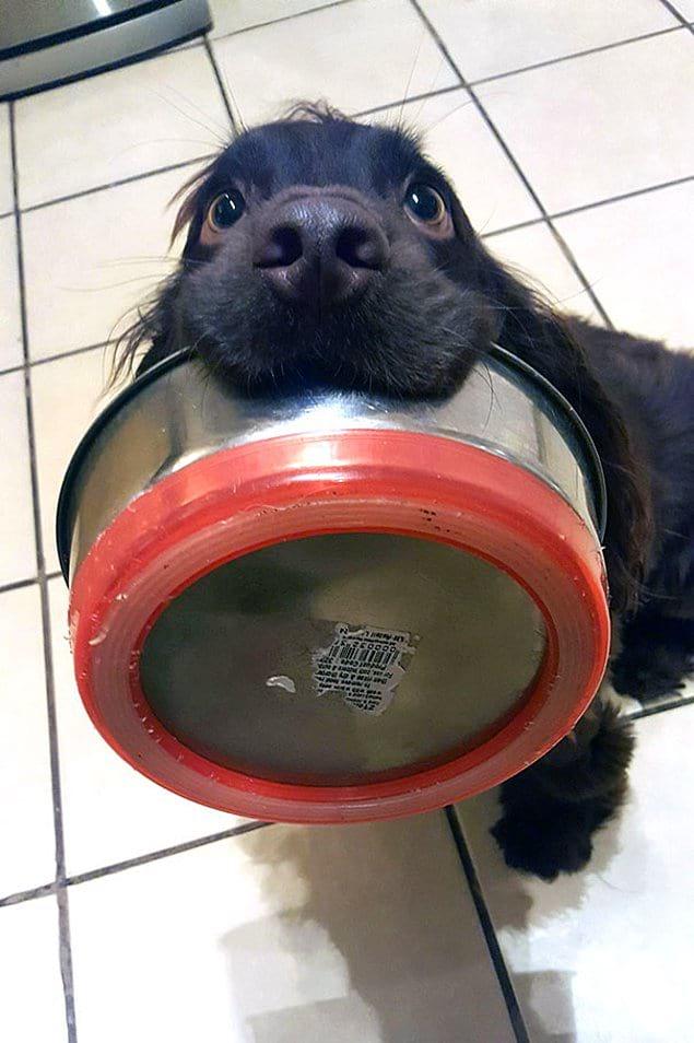 """""""Мой пёс намекает, что он голоден"""""""