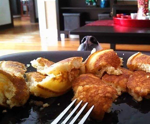 """""""Попросила собаку не смотреть, пока я ем"""""""