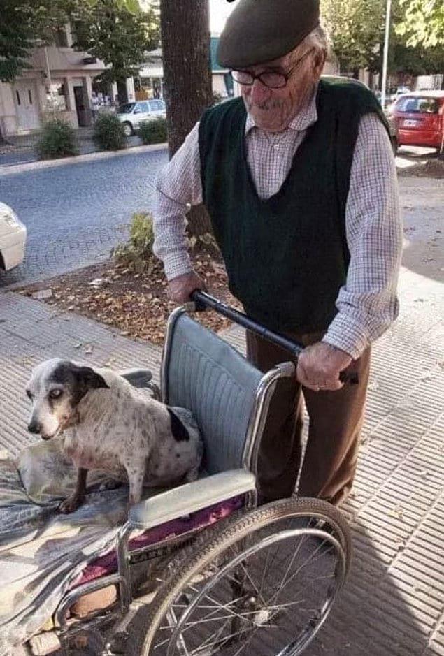 «Собака этого пожилого мужчины больше не может ходить, и он вывозит ее на прогулку в инвалидном кресле каждый день»